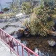 3.「二枚橋滝不動尊の水」