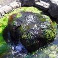 2.大井川港緑地公園の湧水