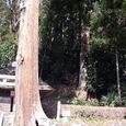 4.湯船八幡神社 夫婦杉